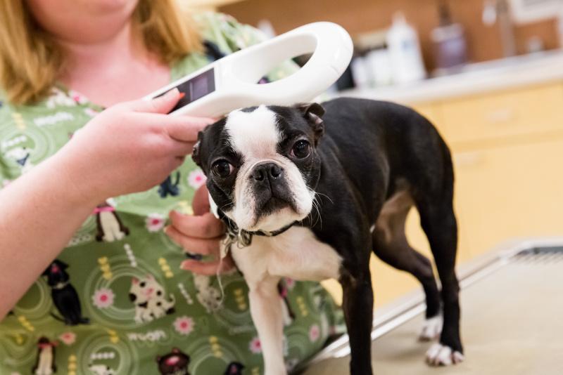 tour-glenmoore-veterinary-hospital-158